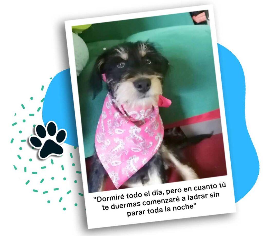 perros   business insider mexico