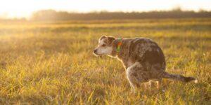 La ciudad de Tel Aviv usará el ADN de caca de perro para rastrear y multar a los dueños que no la recojan de la calle