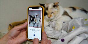 Esta nueva app puede decirte si tu gato está feliz o siente dolor