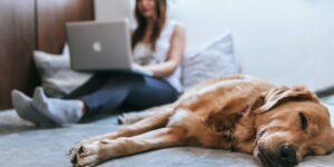 La producción de alimentos para perros y gatos crece gracias a una tenencia responsable de las mascotas
