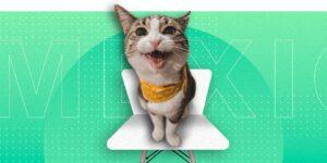 6 mitos acerca de los gatos que debes dejar de creer ahora mismo —celebra el día del gato con una galería de michis