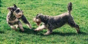 5 mitos y realidades acerca de cómo tratar a nuestros perros