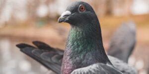 La conexión de Starlink se topa con enemigo inesperado: las palomas