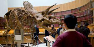 Los restos del triceratops más grande jamás descubierto serán subastados a finales de septiembre —podrían alcanzar los 1.77 millones de dólares