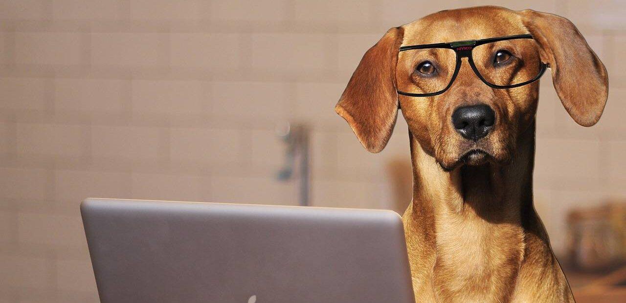 mascotas estrés | Business Insider México