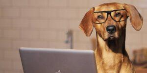 Tener las mascotas en la oficina puede reducir los niveles de estrés y aumentar la productividad de los empleados