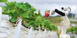 Cómo estos robots recolectores de lechugas están transformando la agricultura en una granja 'manos libres'