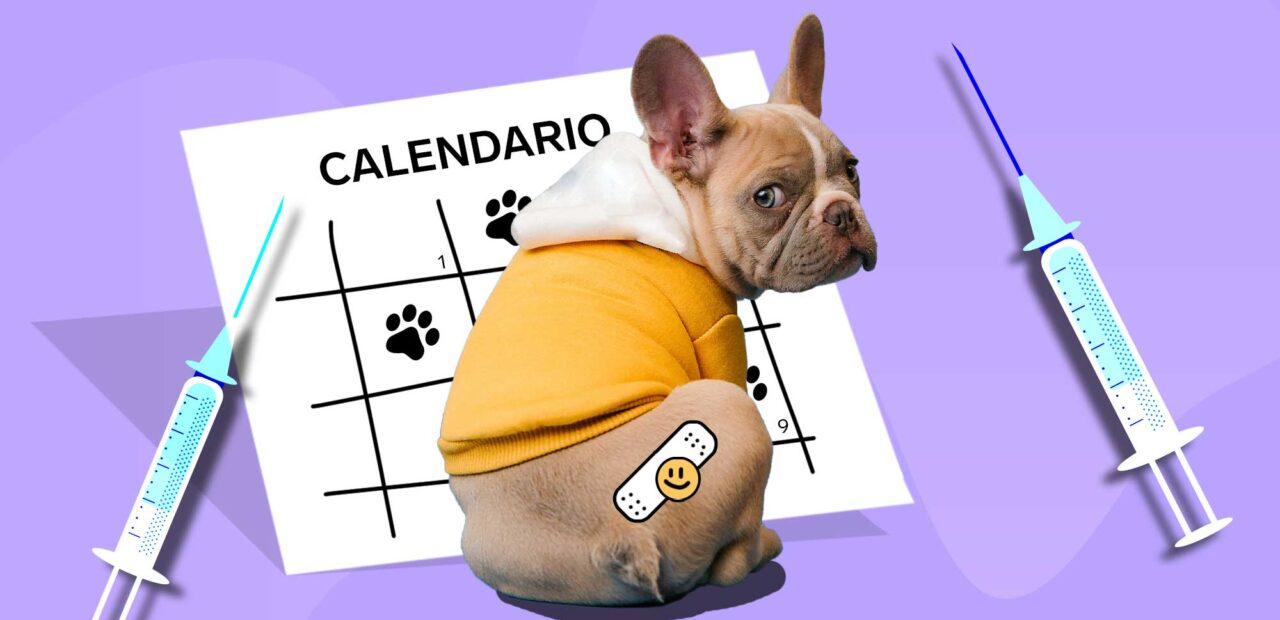 Vacunas perros   Business Insider México