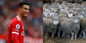Cristiano Ronaldo niega que un rebaño de ovejas ruidosas lo obligara a mudarse de casa