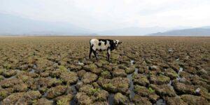 Países ricos incumplen meta de 100,000 millones de dólares para lucha contra cambio climático
