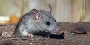 Científicos logran imprimir en 3D neuronas vivas de ratones —es un paso importante para reemplazar la experimentación animal
