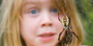 Investigadores de la Universidad de Basilea desarrollaron una app de realidad aumentada que puede ayudar a combatir el miedo a las arañas