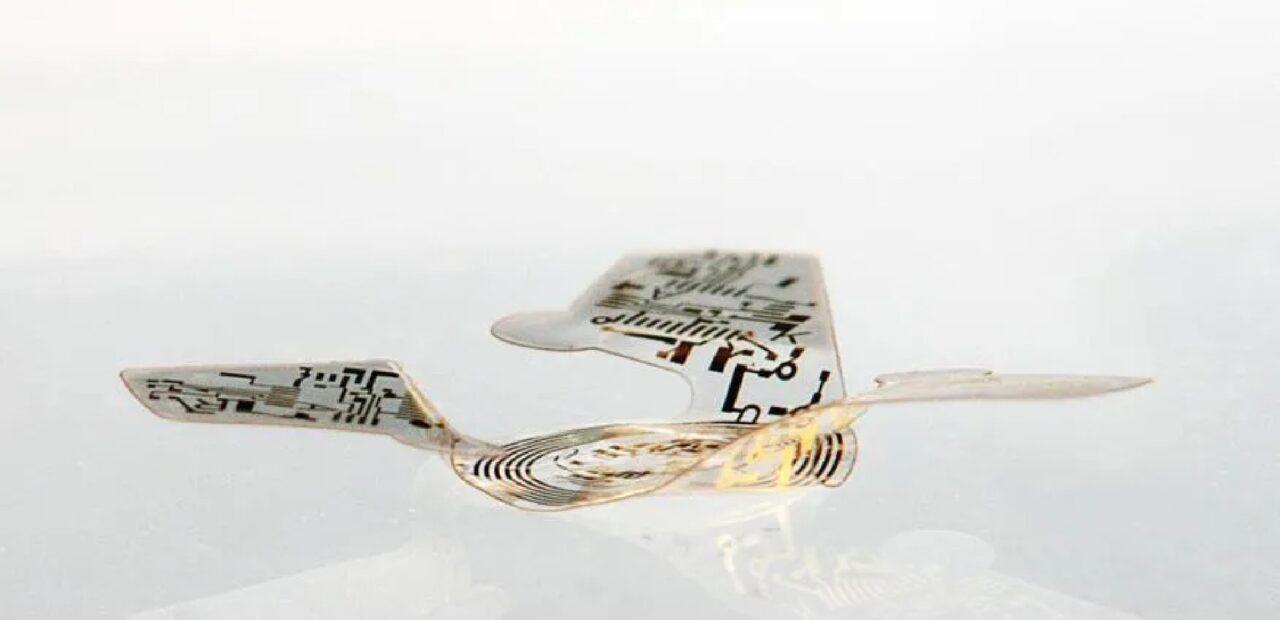 microchip alado|Business Insider Mexico