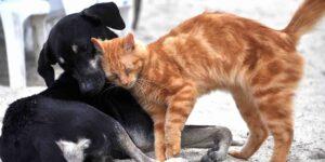 Registro Único de Animales de Compañía de la CDMX —estos son los pasos a seguir para inscribir a tu perro o gato