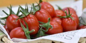 Estas ensaladas reducen la presión arterial. Salen a la venta los primeros jitomates modificados genéticamente.