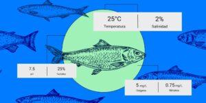 Preemar analiza la calidad del agua con ayuda de la inteligencia artificial para impulsar la acuicultura en México