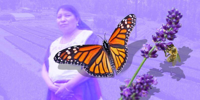 jardines aromáticos mariposa monarca | Business Insider Mexico