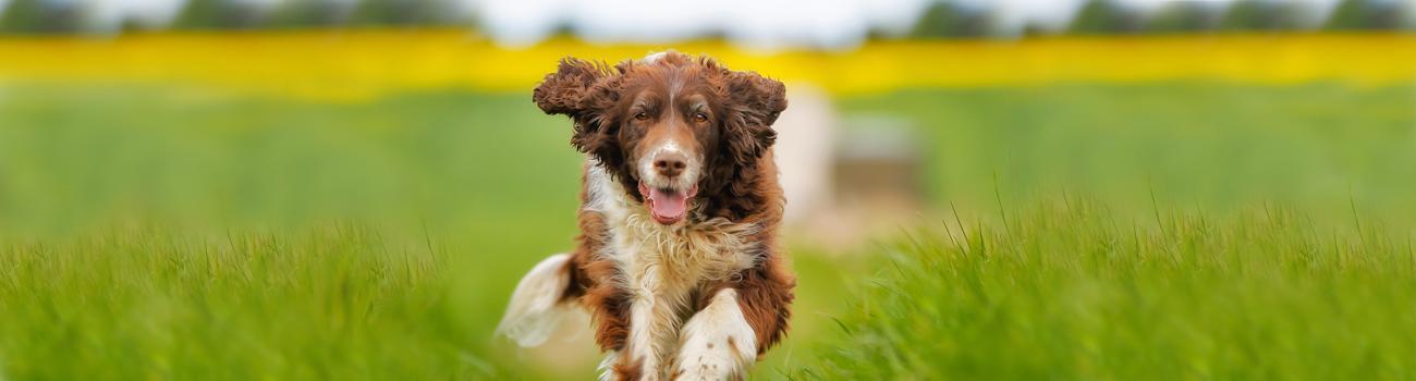 Pet Videos & Benefits   Carnivora Research International