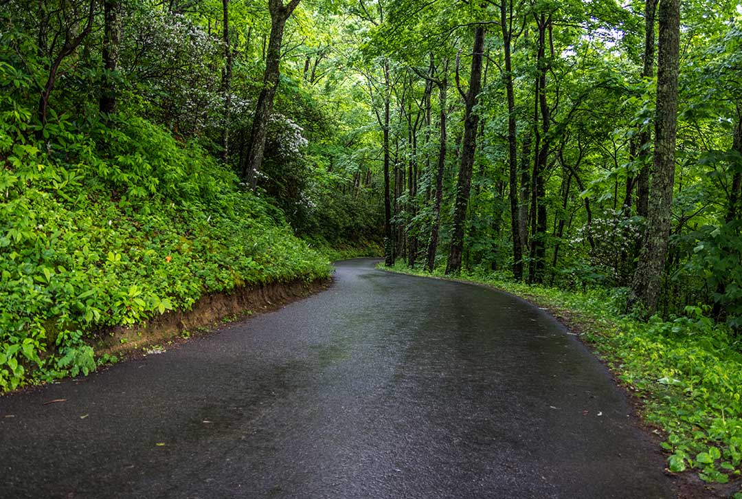 Black topped wet road winding through the Great Smoky Mountains forest