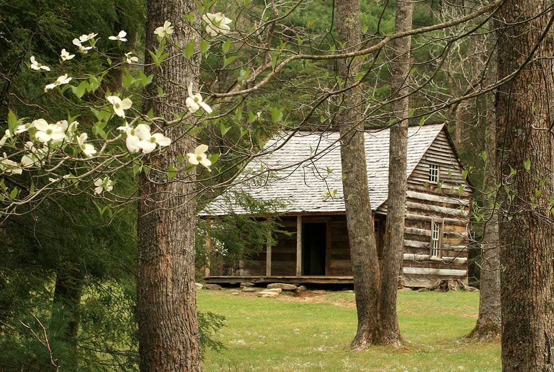 Image of a log cabin in the forest