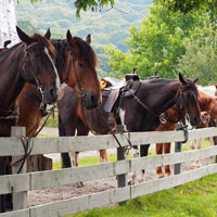 four horses near a low fence