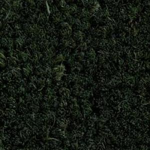 cocoagreen