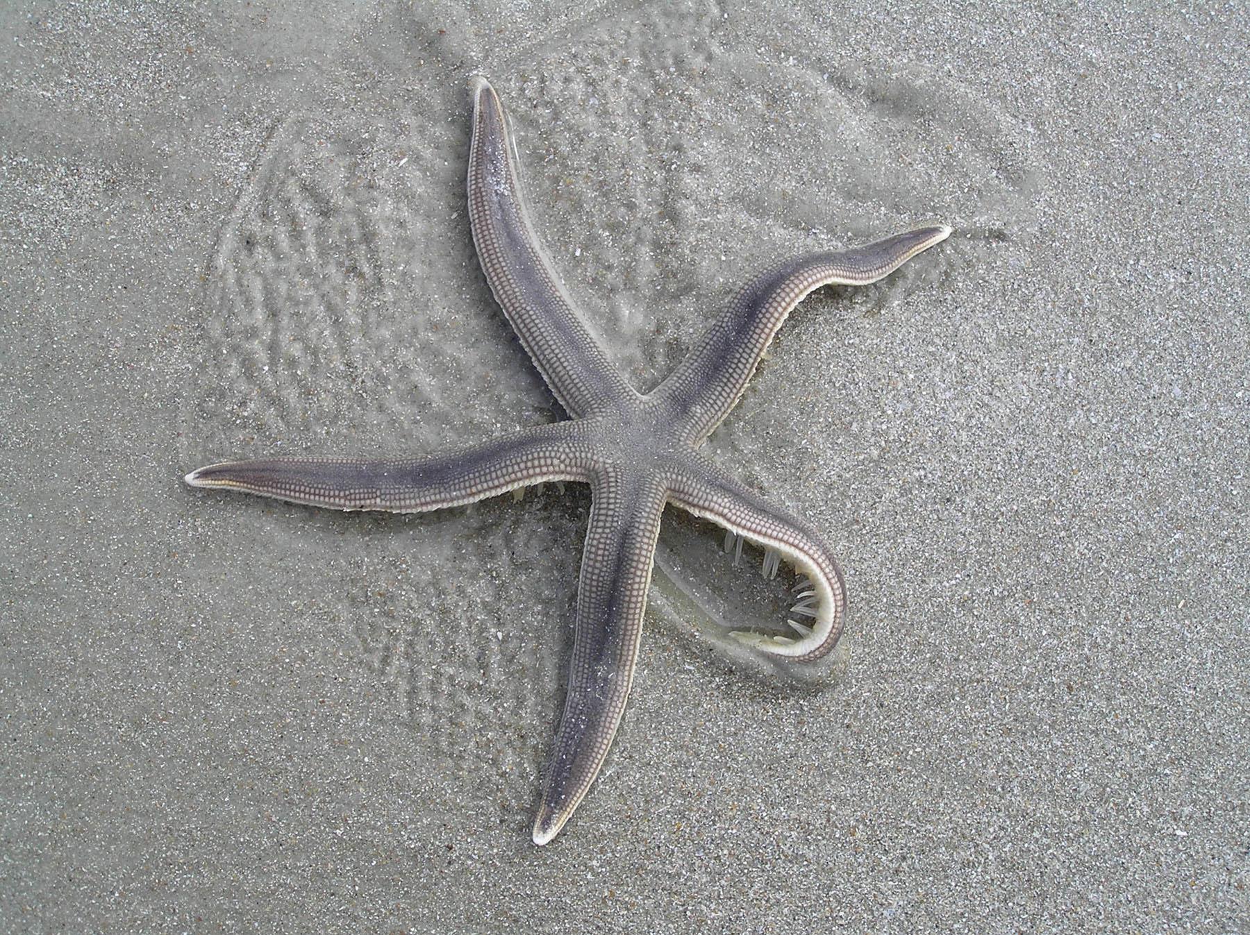 Sea Stars 2d3783b1329