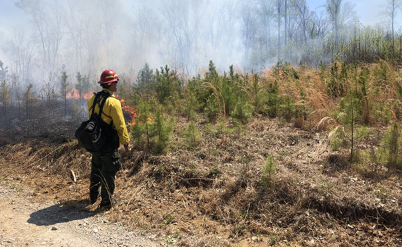 Officials to Conduct Prescribed Burns at Hoosier National Forest