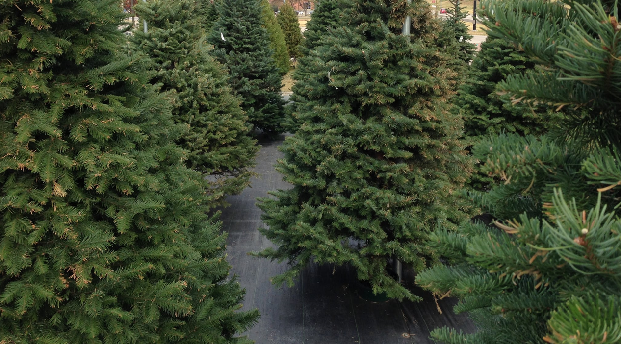 Huntingburg Street Department to Pick-Up Live Christmas Trees in January