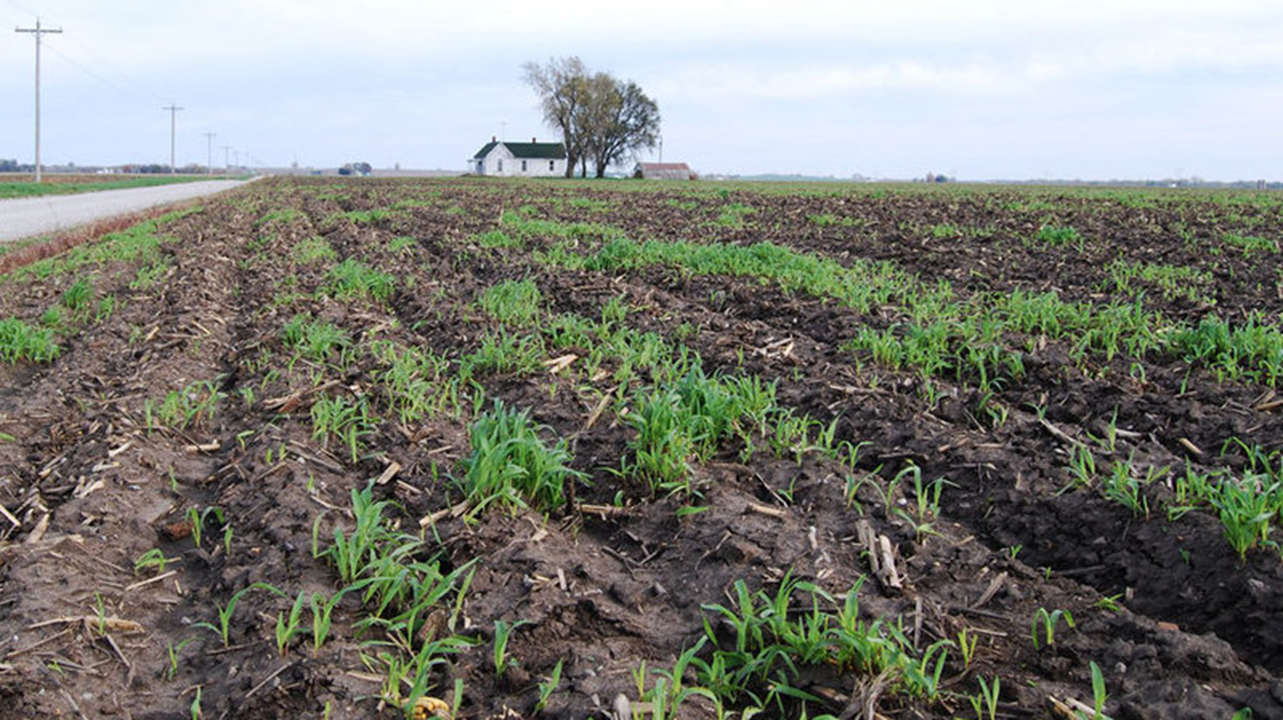 EXPERTS:  This Season's Crop Could be Among the Worst Ever in Indiana