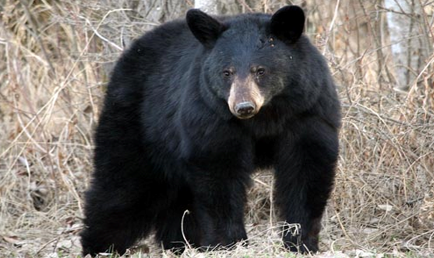 Southern Indiana Bear Incident Has Been Confirmed