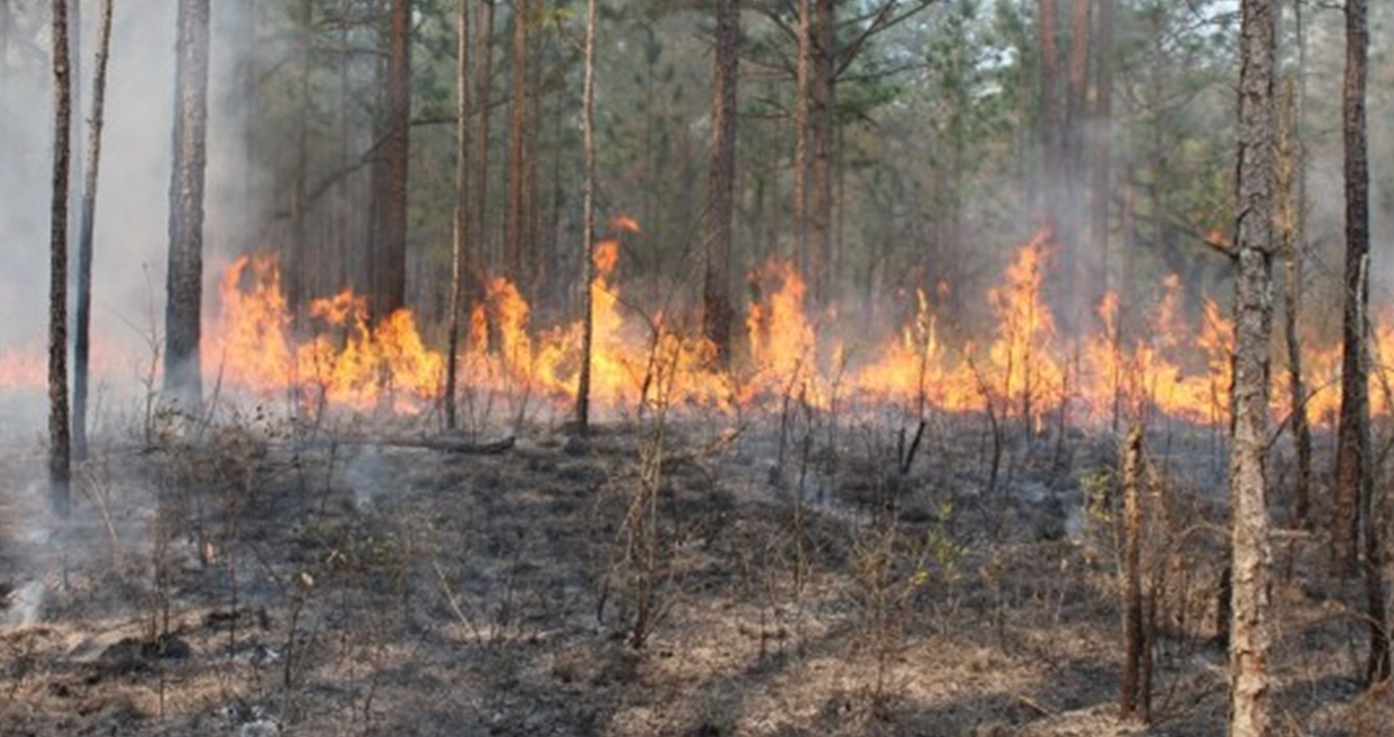 Hoosier National Forest Officials to Start Fires for Forest Management Purposes