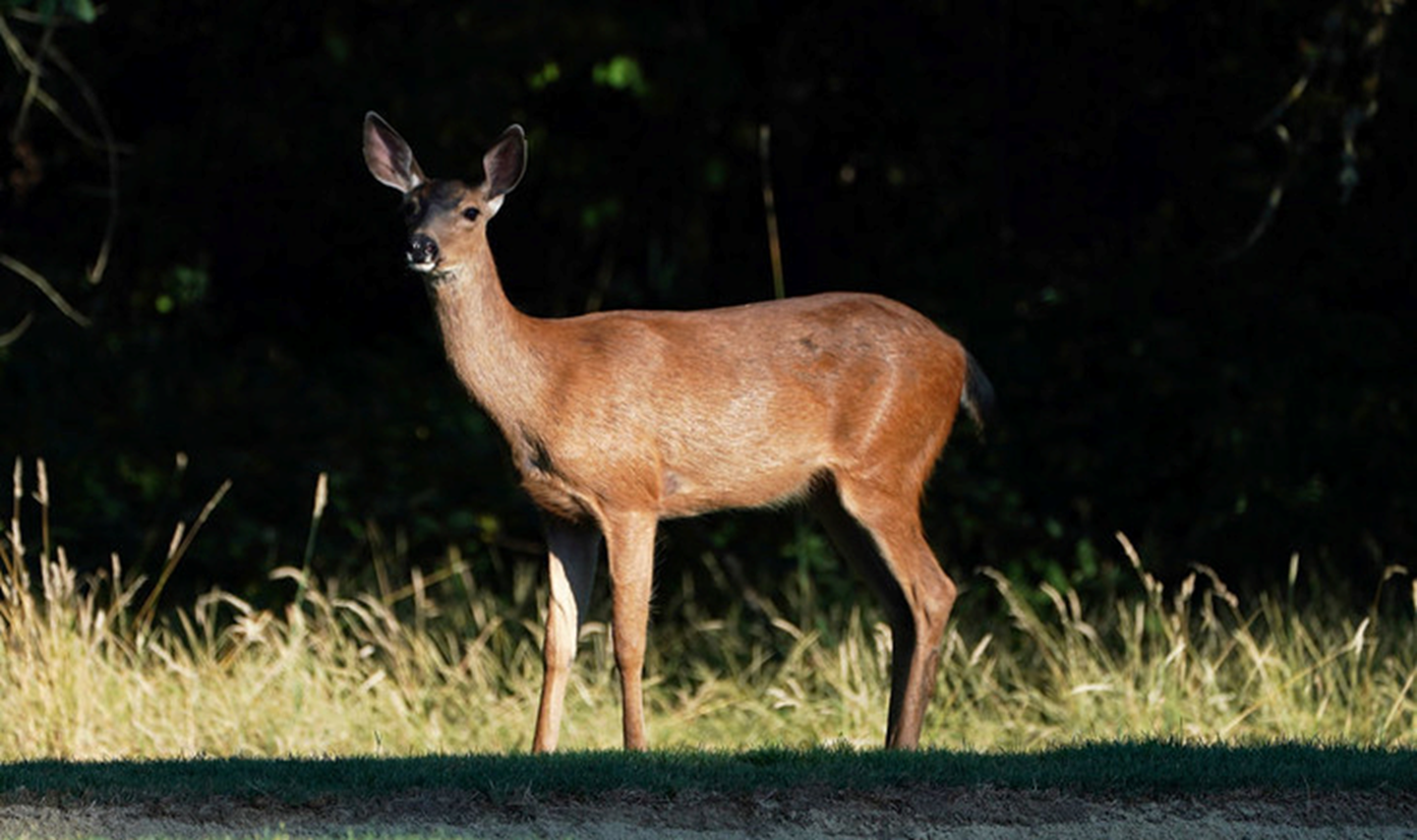 DNR Confirms Dead, Sick Deer From EHD in Clark County