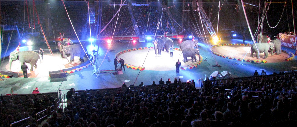 Some Local Kids Get to See Hadi Shrine Circus For Free Thanks to Your Donations