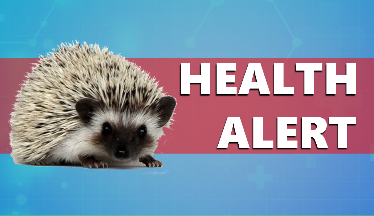 Salmonella Outbreak Linked to Hedgehogs Shows Up in Indiana, Officials Warn