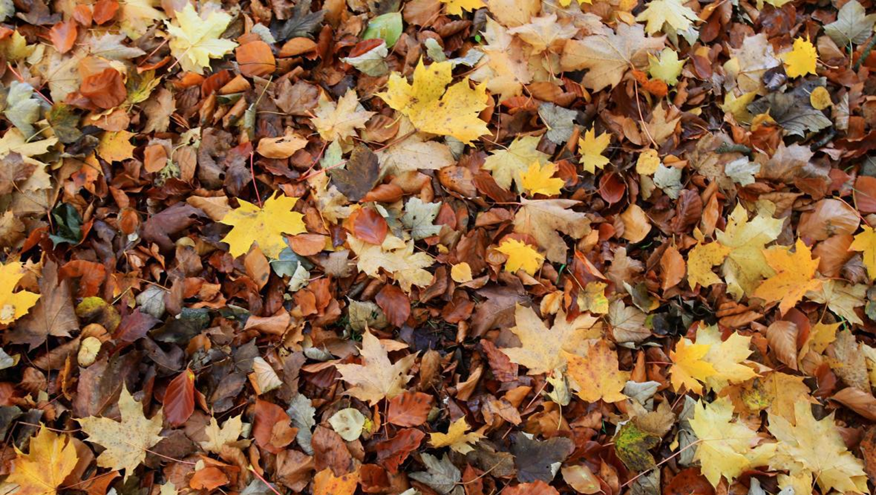 City of Huntingburg Leaf Pick-Up Program to Begin November 4