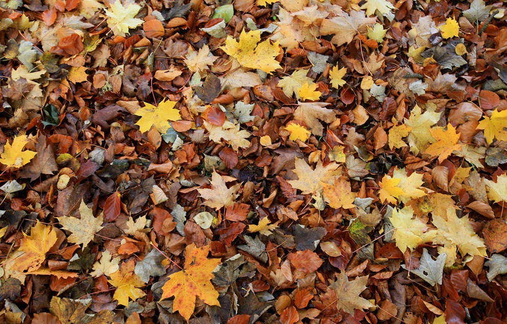 Bulk Leaf Collection to End December 21st in Jasper and Huntingburg