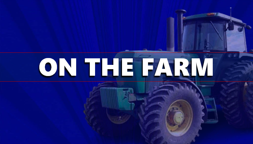 Local Farmers Can Run For Indiana Corn Marketing Council in 2019, Here's How...
