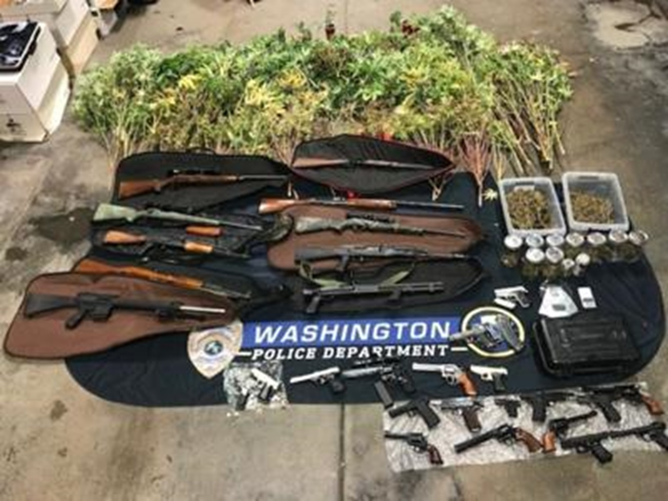 Traffic Stop Leads to Stolen Guns and Over a Hundred Marijuana Plants