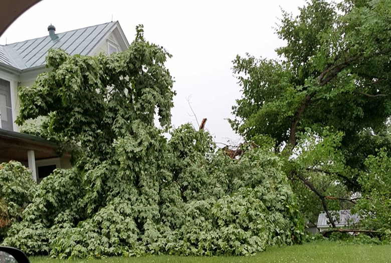 Jasper, Huntingburg Collecting Limbs Downed in Severe Storms Last Week
