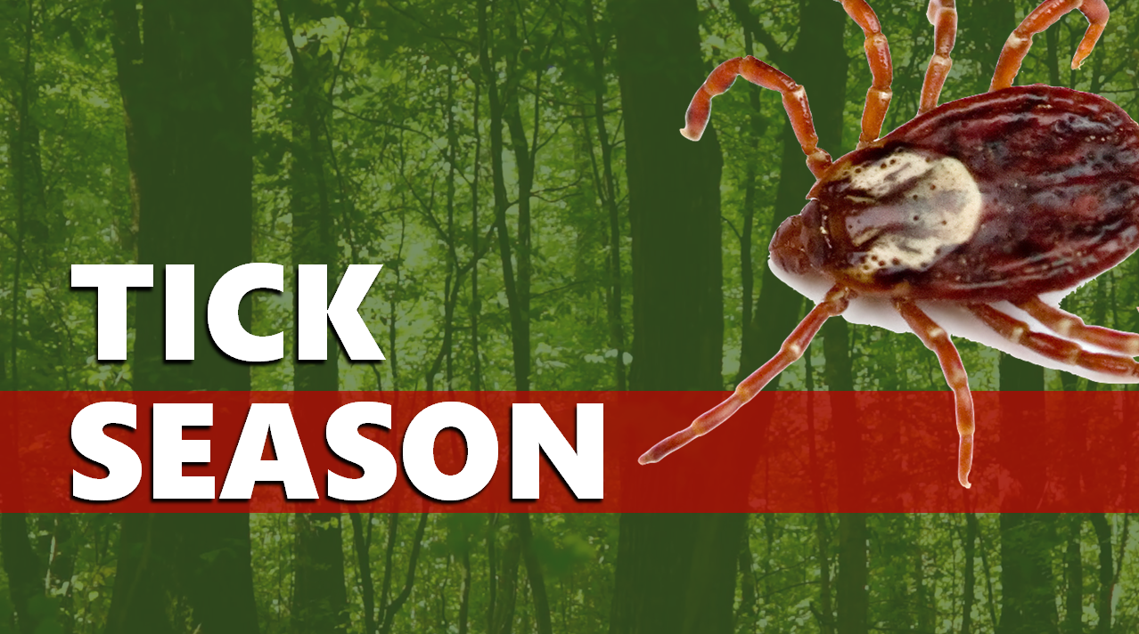Warmer Weather Brings Rise in Tick Activity Across the State, Officials Urge Caution