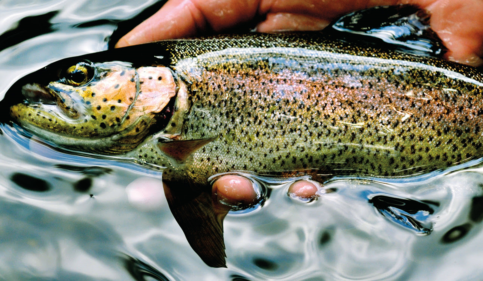 Trout Season:  What DNR Officials Want You to Know Before You Cast Your Line