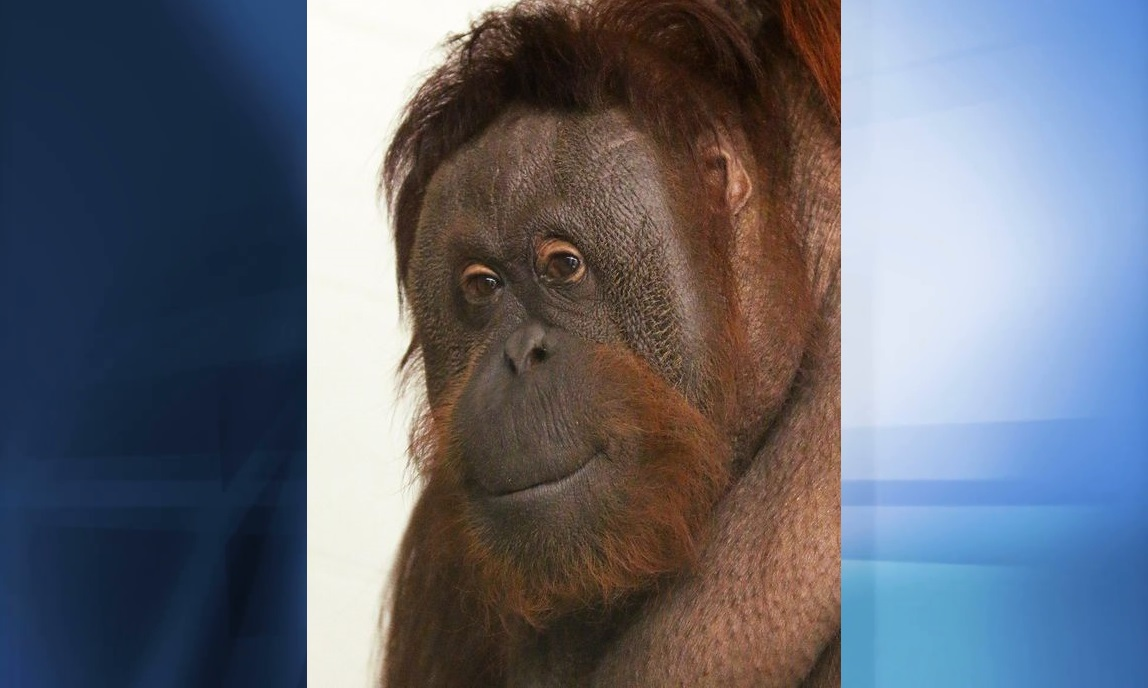 Another Animal Dies at Indianapolis Zoo