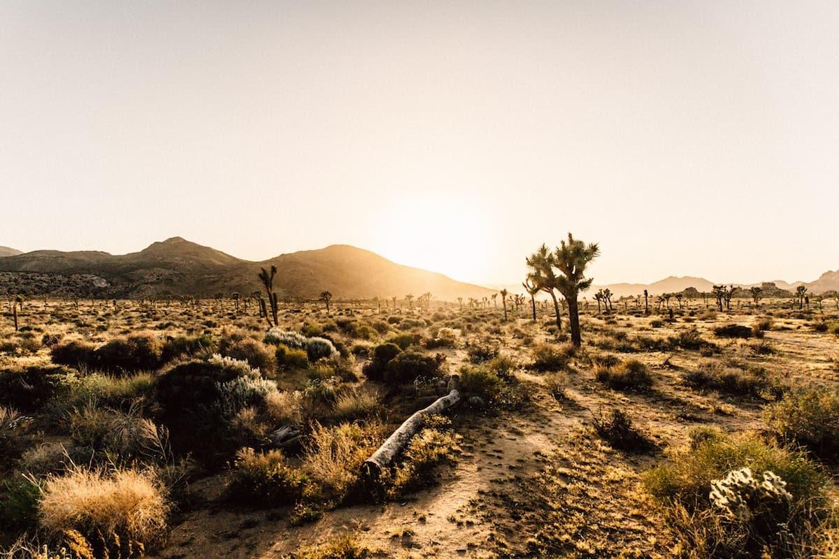 Cataviña: el oasis en medio del desierto de Baja California