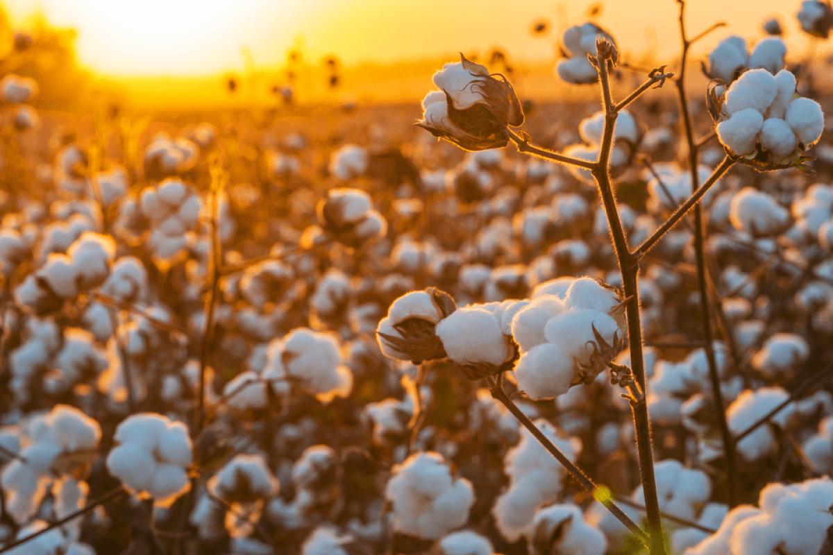 BUSOLINEA - Guía de viaje: Qué hacer en Torreón