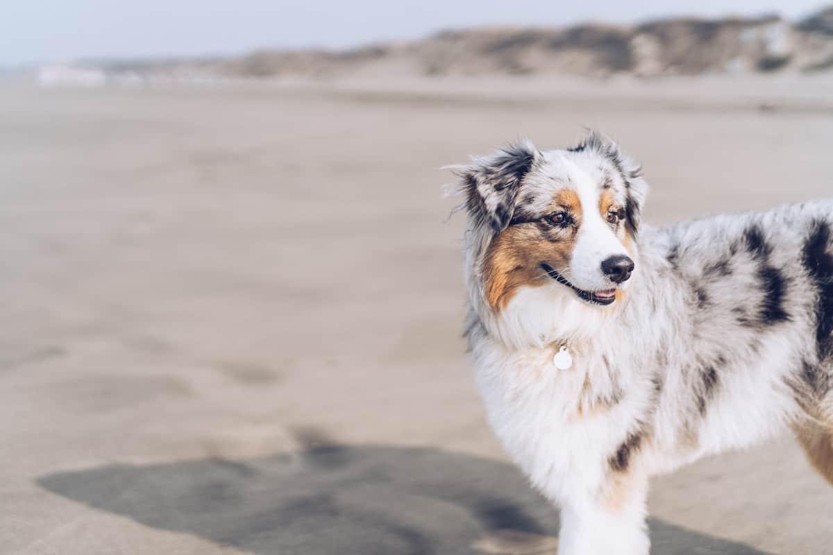 5 destinos para viajar con mascotas