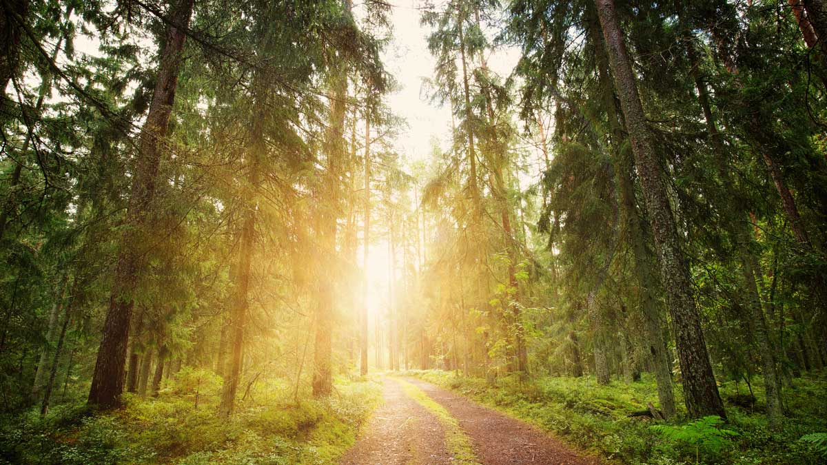 Religion Seminar Series: The Places That Move Us: Ecological Vocations
