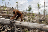 Say No to Palm Oil Products