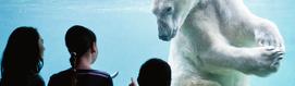 Polar-bear-people_tss