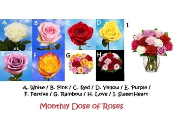 Wall_dose_of_roses